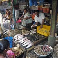 vijayawada fish market...