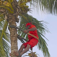 red man in tree...